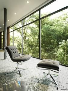 Forest-windows